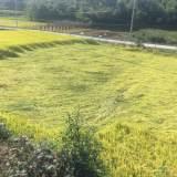 台风过后,嵊州农田被摧残成这模样!村民欲哭无泪