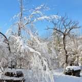 传疯了!春节期间嵊州有严重雨雪冰冻天气?来看权威发布……