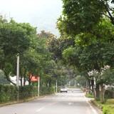 嵊州这个村因这东西发财了,全村80%的家庭都在做…