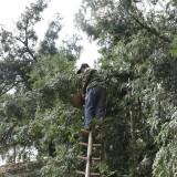 悲剧!嵊州一人摘香榧从树上跌落不幸身亡…