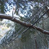 惊险!嵊州这里十多米长的树干横砸在电线上…