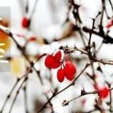 冬至~扫墓公交专线已开通!
