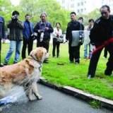嵊州市最新养犬管理办法公布!犬只伤人,主人依法承担相应的法律责任!