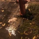 人民医院住院部对面消防栓在漏水