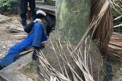 世贸金樽小区一人从树上掉下,看看比较严重