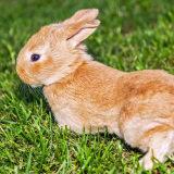 浙江4岁女童养兔子,头发、眉毛、睫毛都掉了…