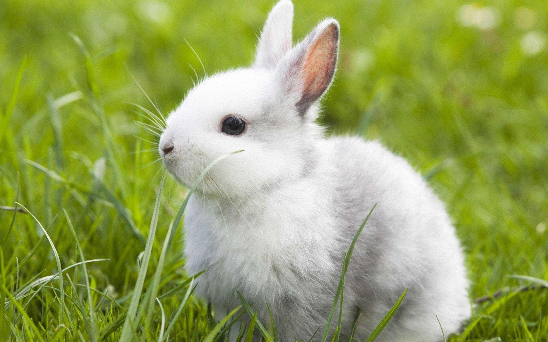 兔毛养殖户